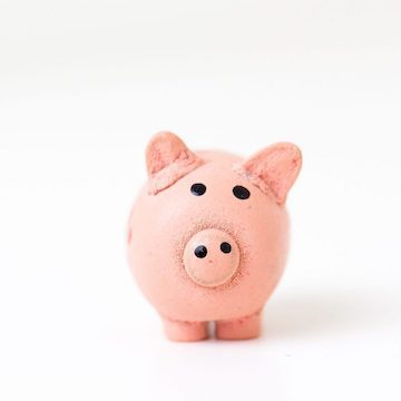 piggy bank stuffed animal pig against white background